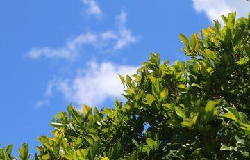 晴れ渡る空と緑