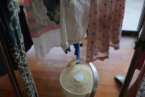 真上を向いて洗濯物を乾かすカモメファン