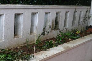 玄関前の植え込み