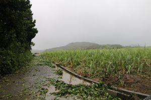 全壊しているサトウキビ畑