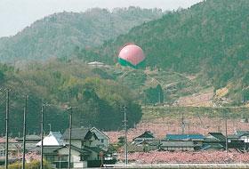 日本一の巨大桃