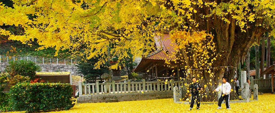 安芸太田町の紅葉風景