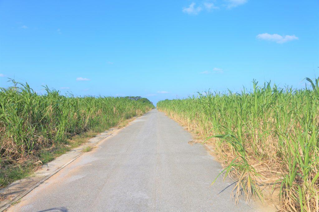 きび畑の道