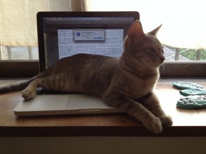 PC作業を阻止して訴えてくる猫