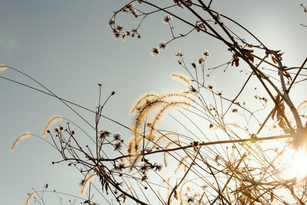 冬の枯れ草