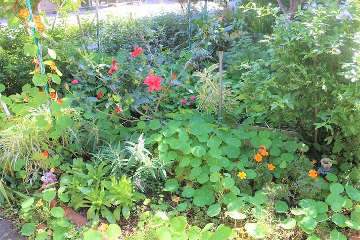 お花の咲く庭