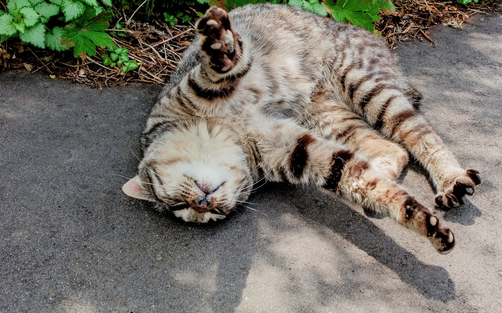 身体を伸ばす猫
