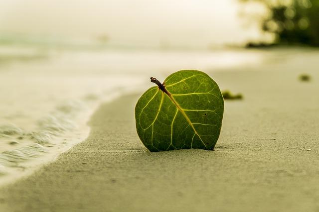 波打ち際の砂浜に刺さった葉っぱ