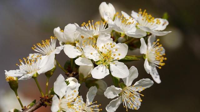 春先の白い花