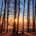 冬の森の朝日