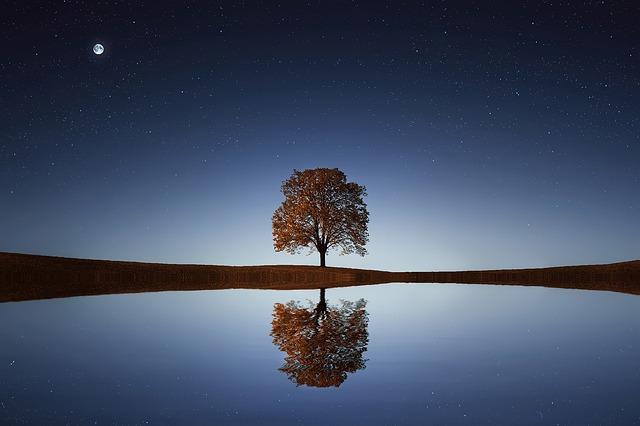 お月様と湖と木