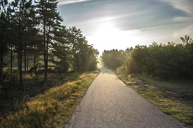 朝日に照らされる道