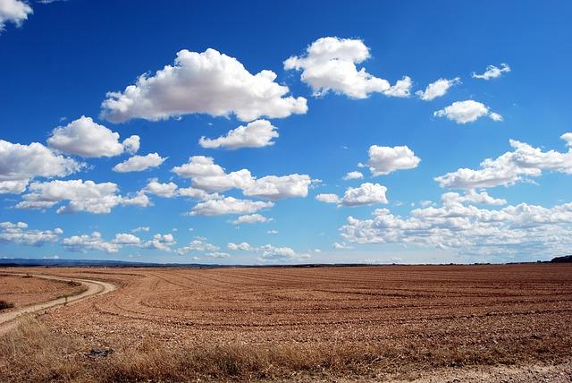 青い空と麦畑