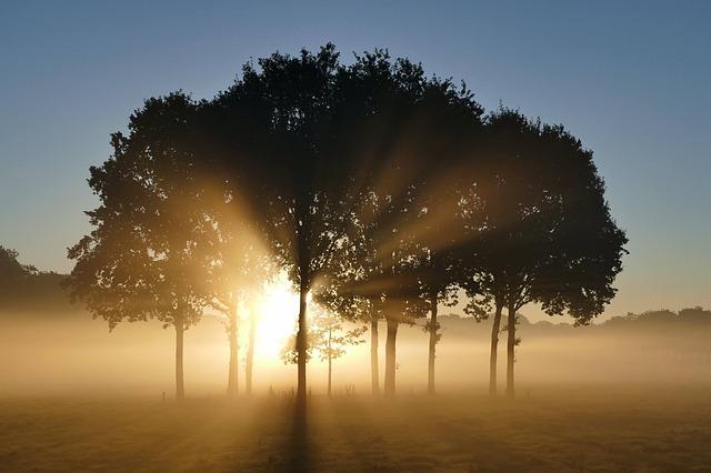 木の隙間からのぼってくる太陽