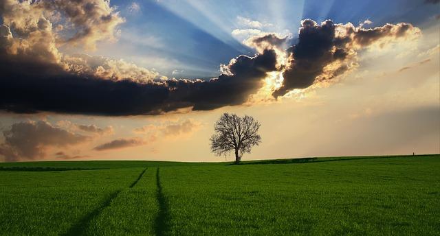 朝日が昇る草原の木