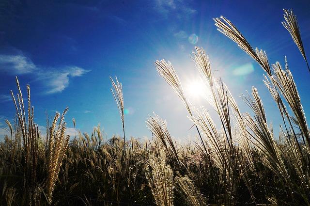 陽に照らされる草たち