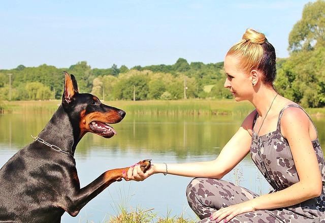 握手をする女性と犬