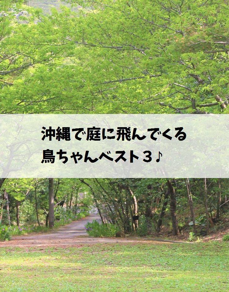 沖縄で庭に飛んでくる鳥ちゃんベスト3