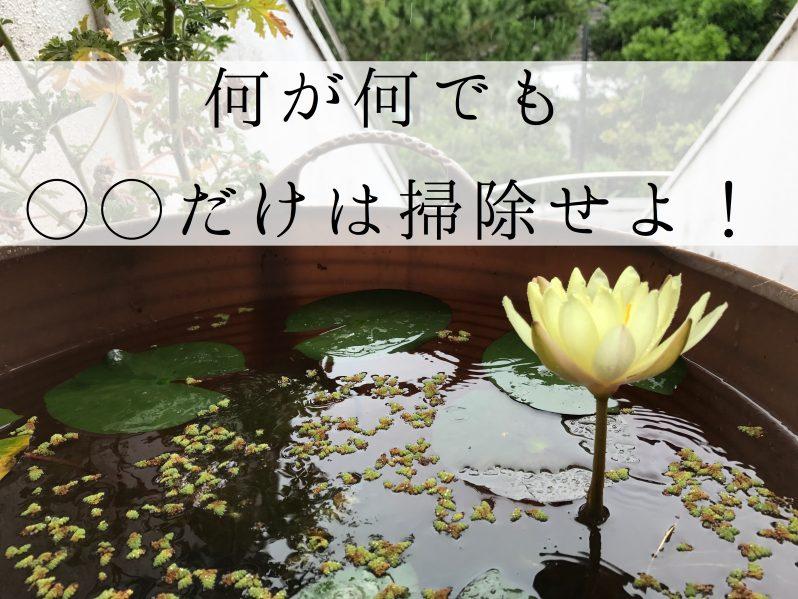 黄色い花が咲いた蓮