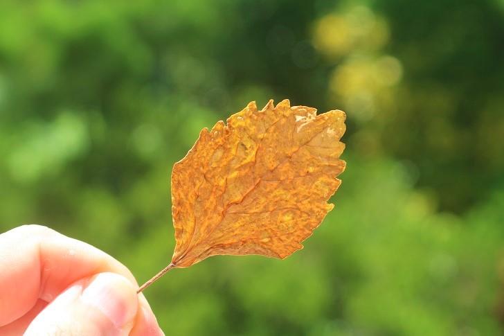 魔法の葉っぱ