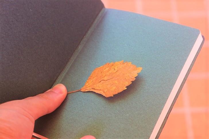 手帳と魔法の葉っぱ