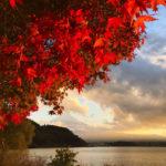 紅葉した河口湖と富士山